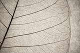 grunge effect leaf cell macro