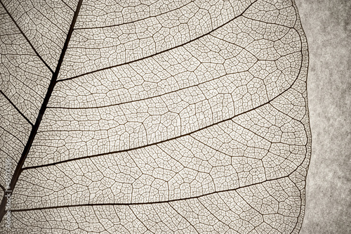 grunge effect leaf cell macro