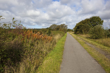 cycle track in autumn