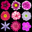 Nine Various Pink, Purple, Red Flowers Isolated on Black