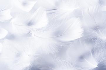 複数の羽根
