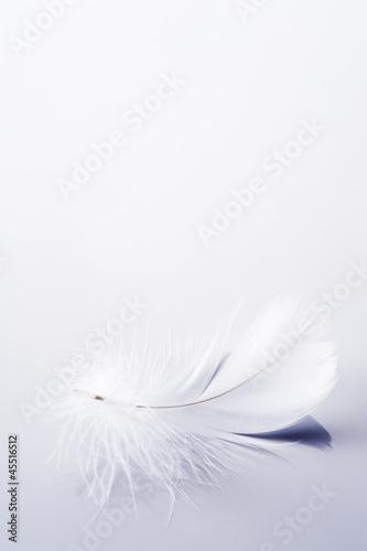 白背景に1枚の羽根