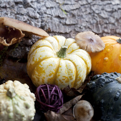 fruits de saison automne sous-bois