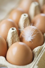 Eggs with a feather in an egg box (close-up)