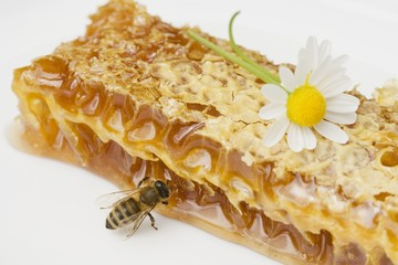 A honeycomb, a bee and a daisy