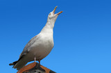 Squawking seagull on rooftop beak wide open.