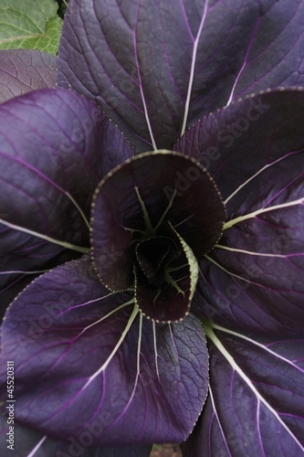 Purple Vegetable Leaves