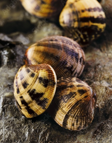 Carpet shell clams on a rock