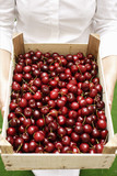 Woman holding crate of fresh cherries