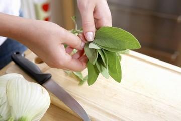 Hands holding fresh sage leaves