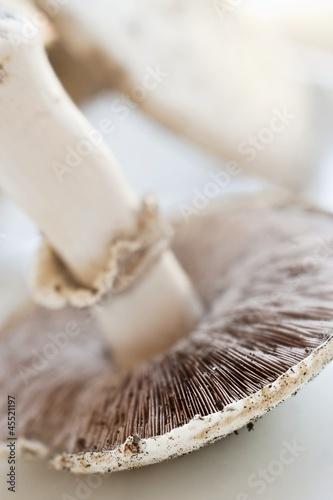 A fresh field mushroom