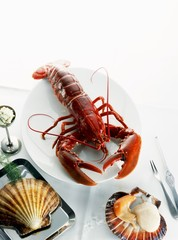 Breton lobster and scallops