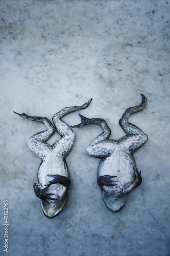 Two Whole Frogs on Marble