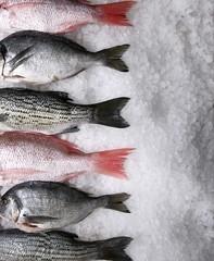 Assorted Whole Fresh Fish on Ice