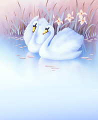two white swans on a pond