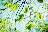 Fototapety Blätter