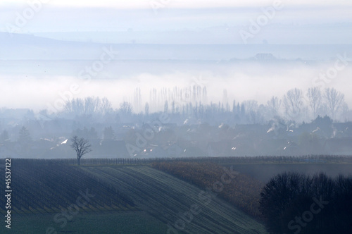 Morning mist on a field