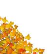 Herbst, Blätter, Ecke, Dekoration, Vorlage, Herbstblätter, Gelb