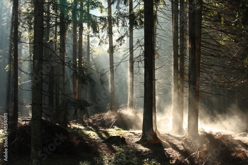 Foto op Canvas Bos in mist early morning mist in forest