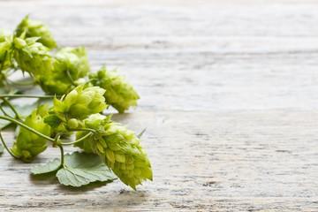 Green plant hops