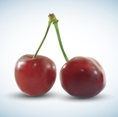 Realistic vector cherry