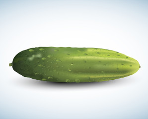 Realistic vector cucumber