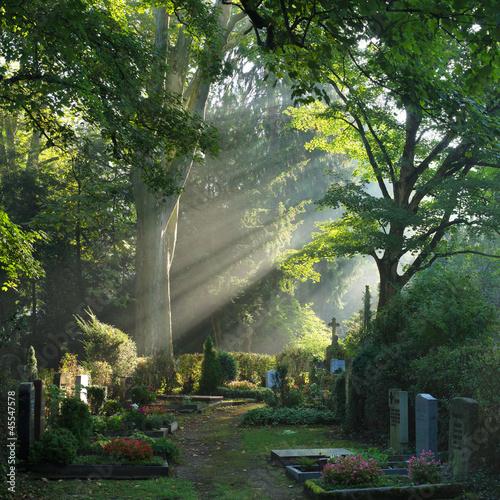 Fotobehang Begraafplaats Bergfriedhof in Heidelberg