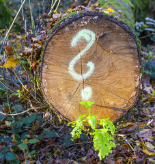 tree in forest with painted question mark