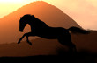 horse silhouette in sunset