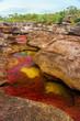A Multicolored River in Colombia - 45549339