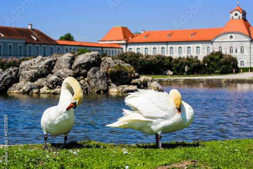 Swans at Park of Nymphenburg