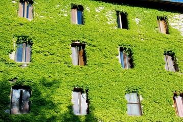 edificio ricoperto di edera