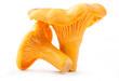 Edible wild mushroom - chanterelle (Cantharellus cibarius) - 45554721