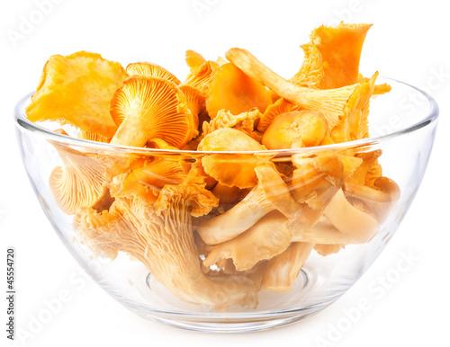 Edible wild mushroom – chanterelle (Cantharellus cibarius)