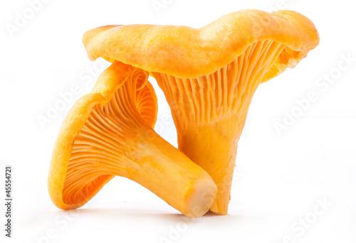 Leinwandbild Motiv Edible wild mushroom - chanterelle (Cantharellus cibarius)