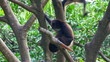 Monkey grooming