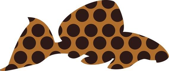 Leopard pleco - freshwater aquarium fish