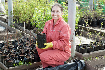 Female gardener chooses  sprouts