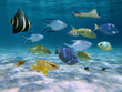 School of fish over a sandy ocean floor