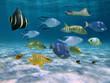School of fish over a sandy ocean floor