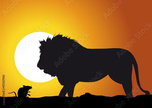 Lion_rat
