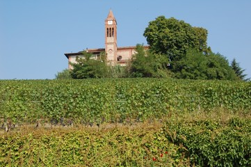 End of Summers - vineyards in the Langhe Piedmont Region, Italy