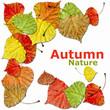 Autumn leafs dream