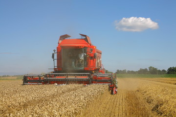 Récolte du blé :  moissoneuse rouge