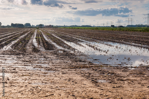Wet farmland in the Netherlands