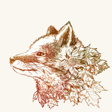 Automne renard