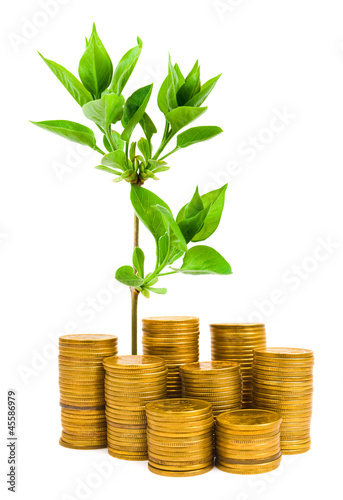 Money and plant