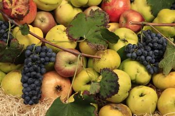 frutta antica biologica naturale
