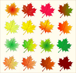Bunte Ahorn Blätter Im Herbst