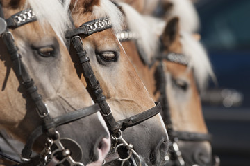 Pferde Trilogie